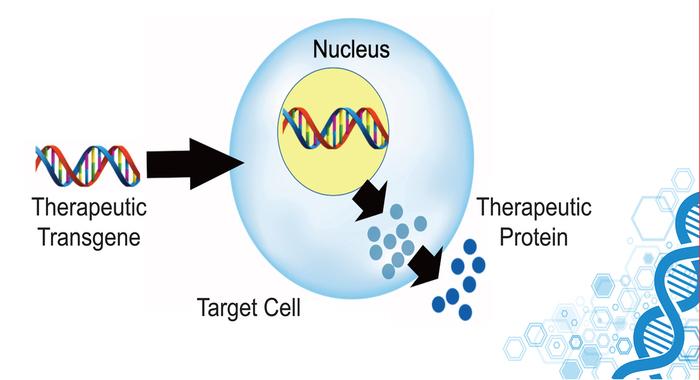 Симуляции показывают, как сделать эффективной генную терапию