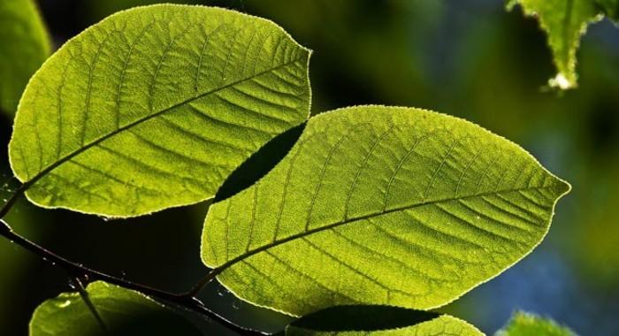 Havanın təmizlənməsi üçün süni ağaclar yaradılıb